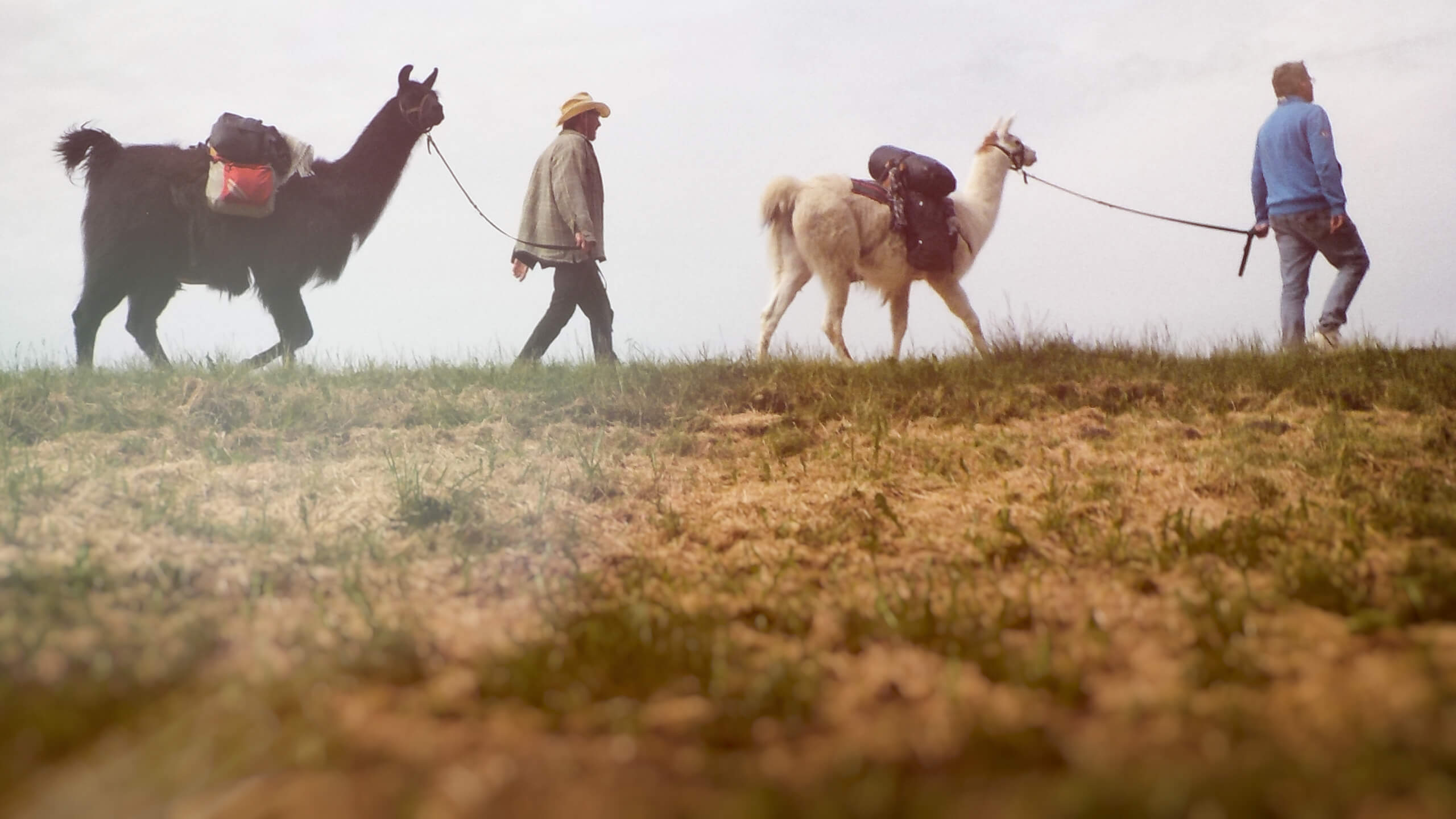 Der Lama-Karawane Blog
